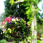 how to create overflowing hanging baskets