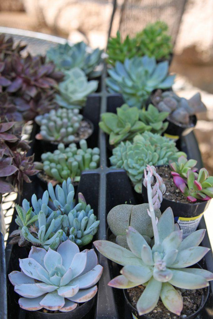 varieties of succulents for wreath