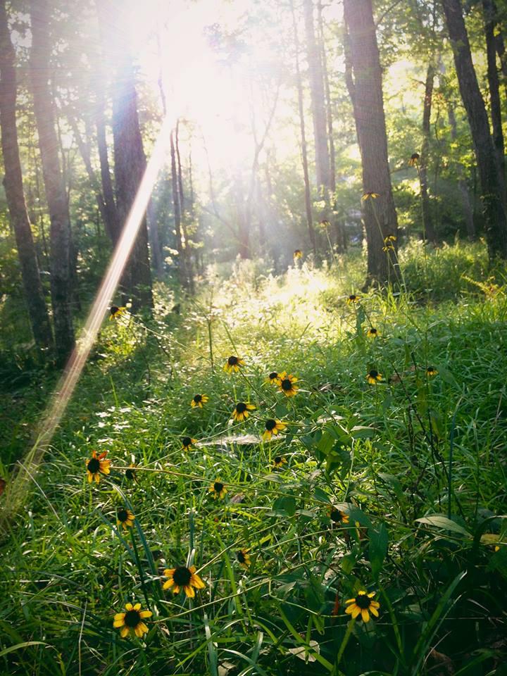 Wildflower summer in Alabama