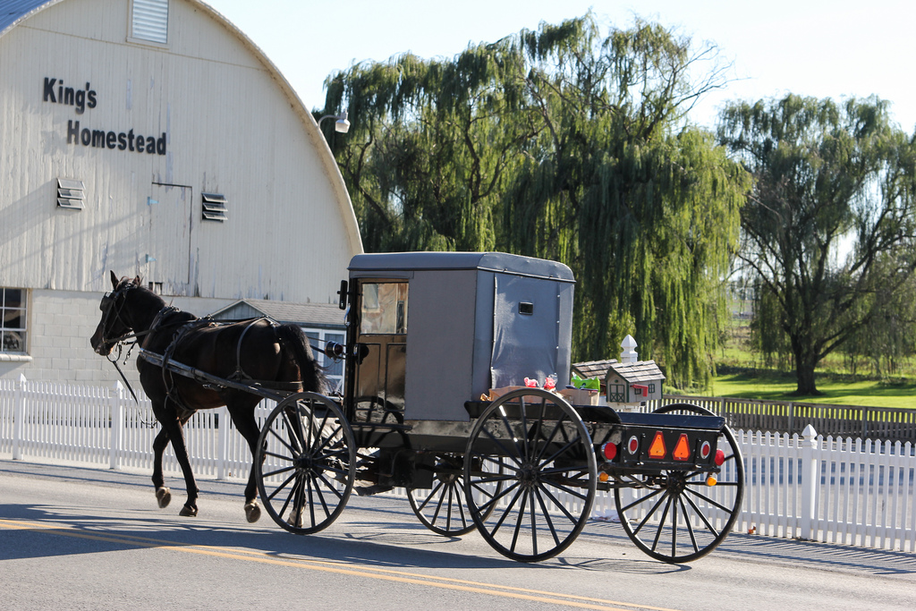 We saw this amish buggy on the road and fell in love at how cute it was!