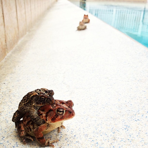 Roman Froggy bathhouse