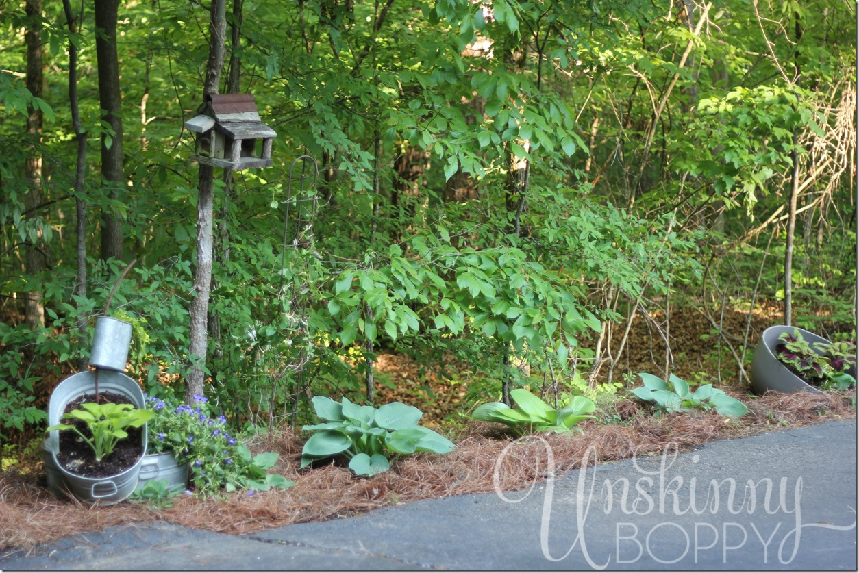 driveway lined with hosta