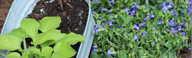 Pinterest inspired Galvanized bucket Stacked Planter