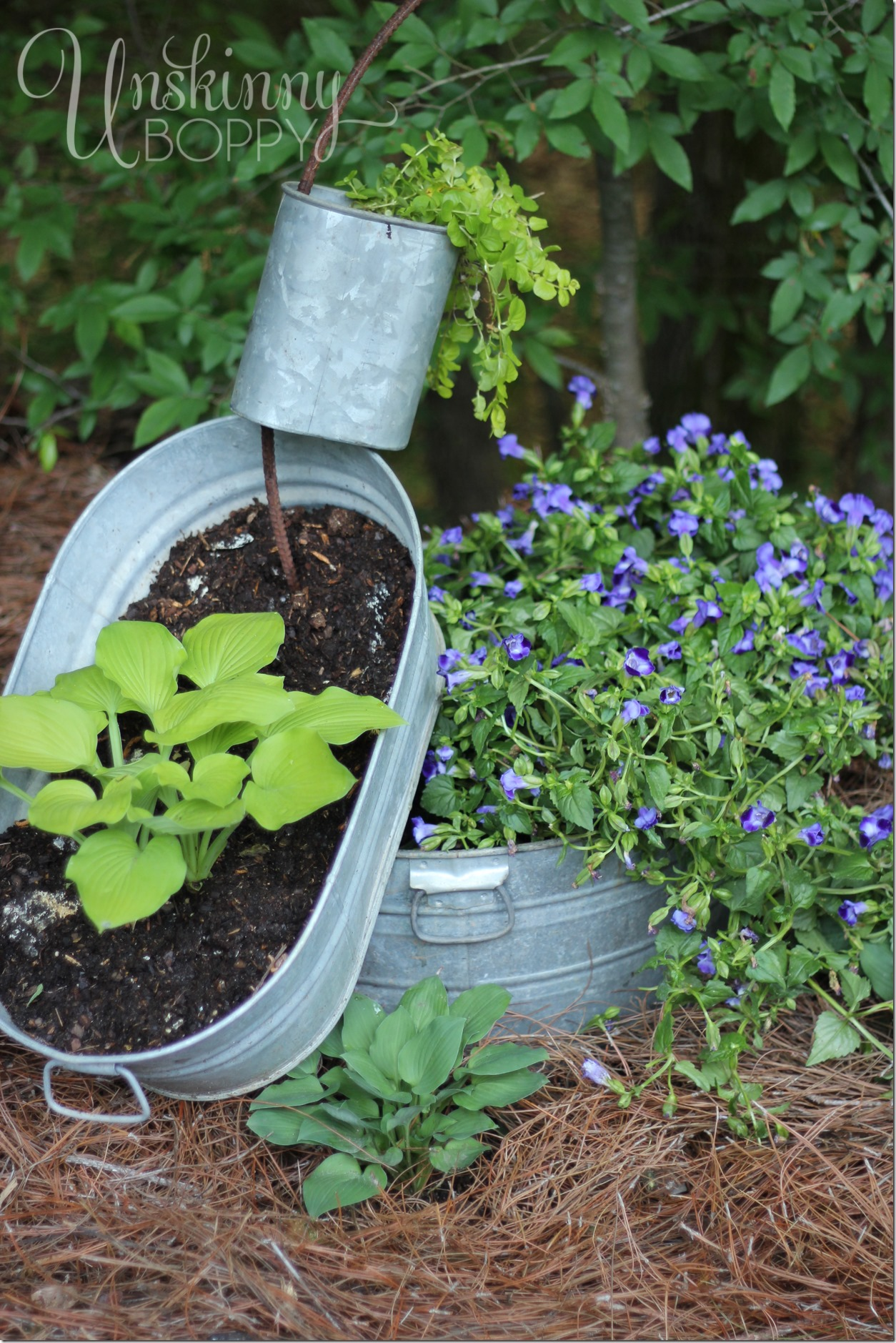 spilling planter with hosta and creeping jenny