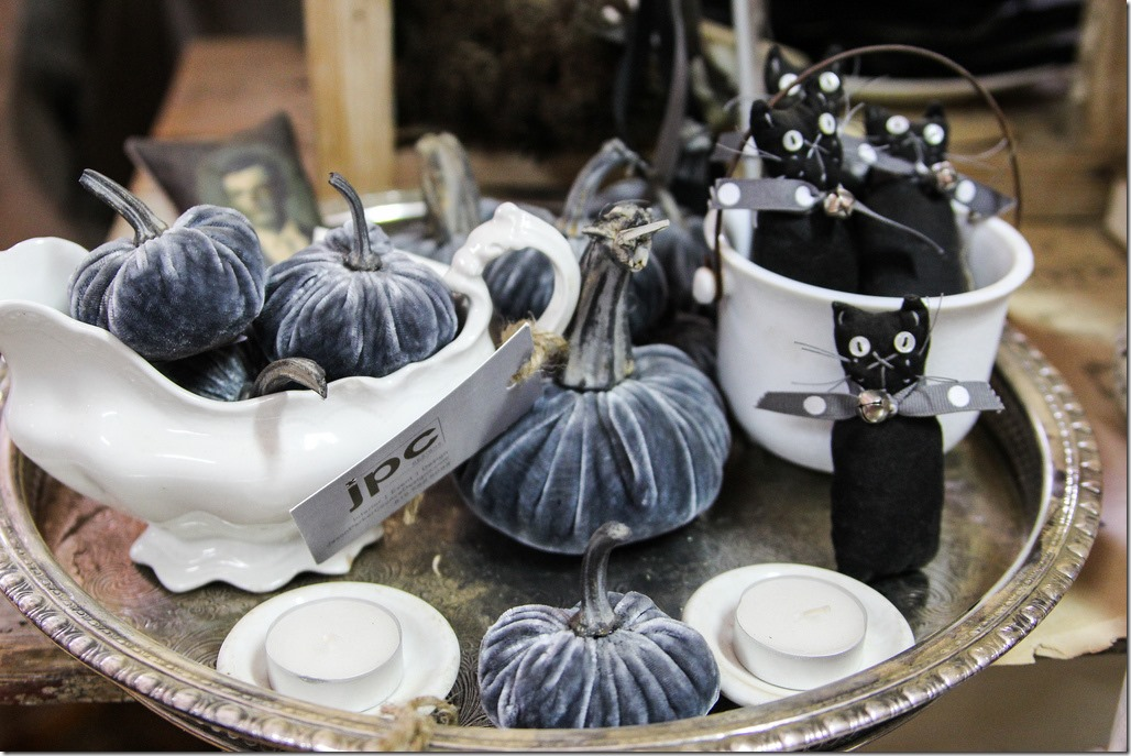 blue velvet pumpkins