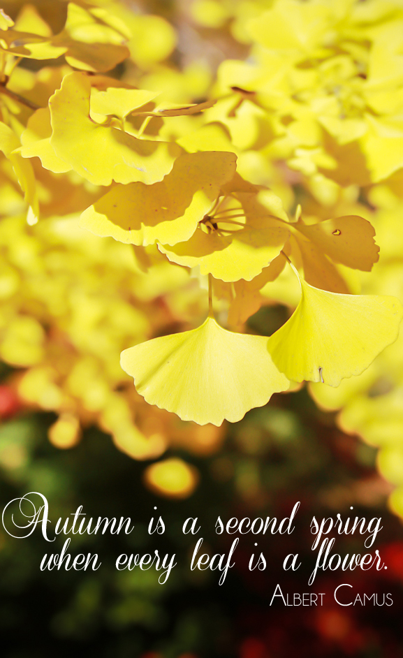 Autumn leaves quote