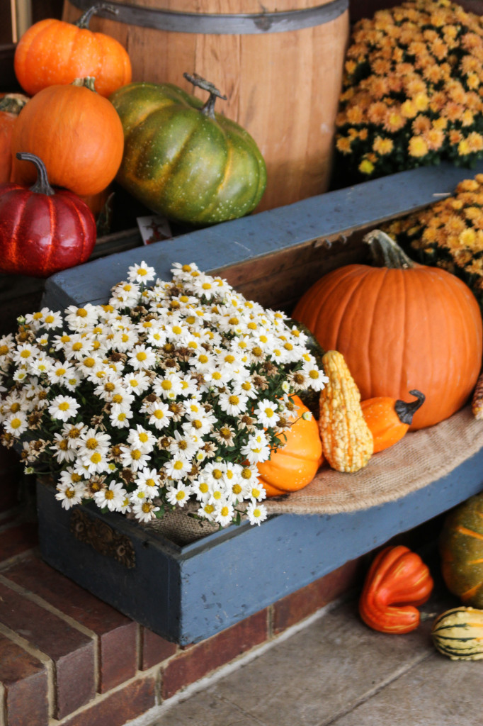 Old tool chest holds pumpkins and mums on the porch