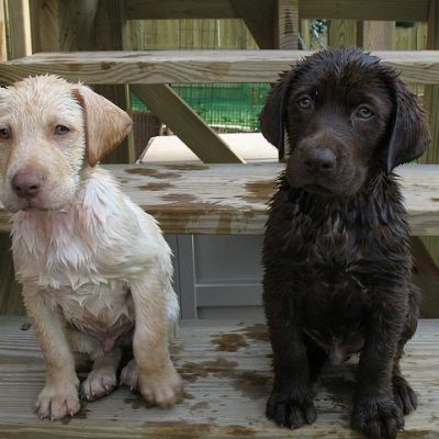 Puppies after a bath