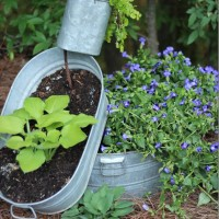 spilling-planter-with-hosta-and-creeping-jenny_thumb