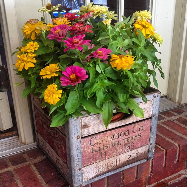 Zinnias in a Carnation Milk Crate