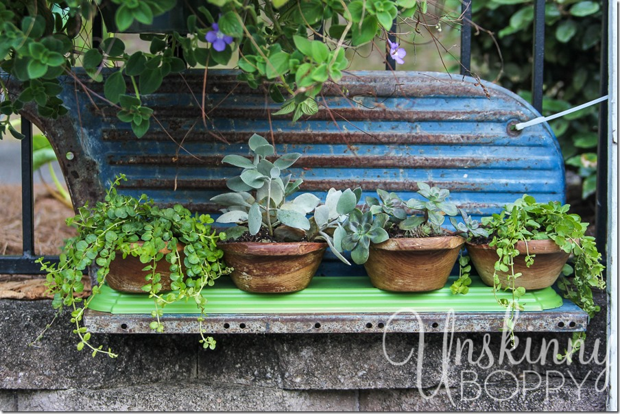 DIY wooden bowls planters with succulents and creeping jenny-4