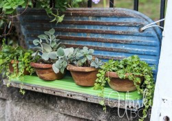DIY-wooden-bowls-planters-with-succulents-and-creeping-jenny-5.jpg
