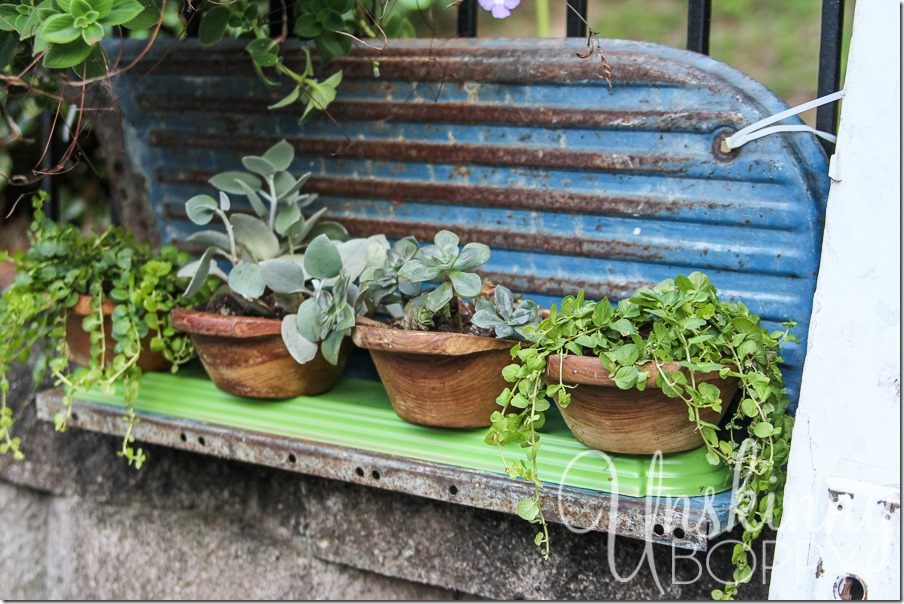 DIY wooden bowls planters with succulents and creeping jenny-5