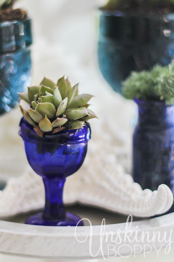 Succulent in an antique glass eye cup