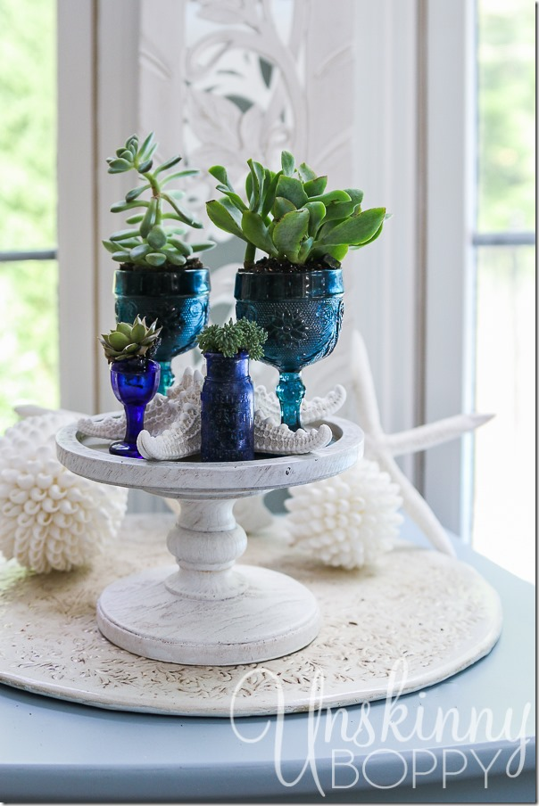 Succulents and seashells-1