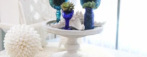 Succulents and seashells