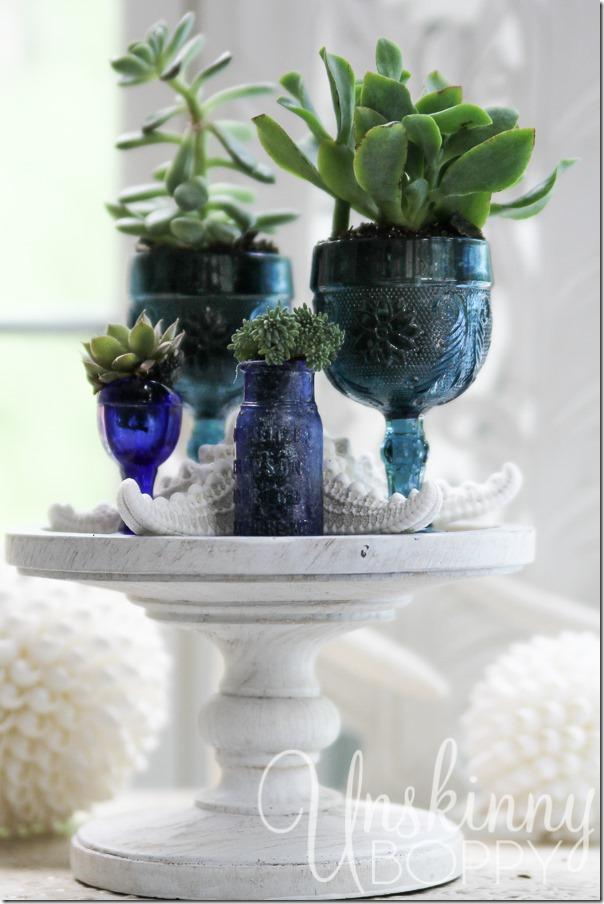 Succulents and seashells-7