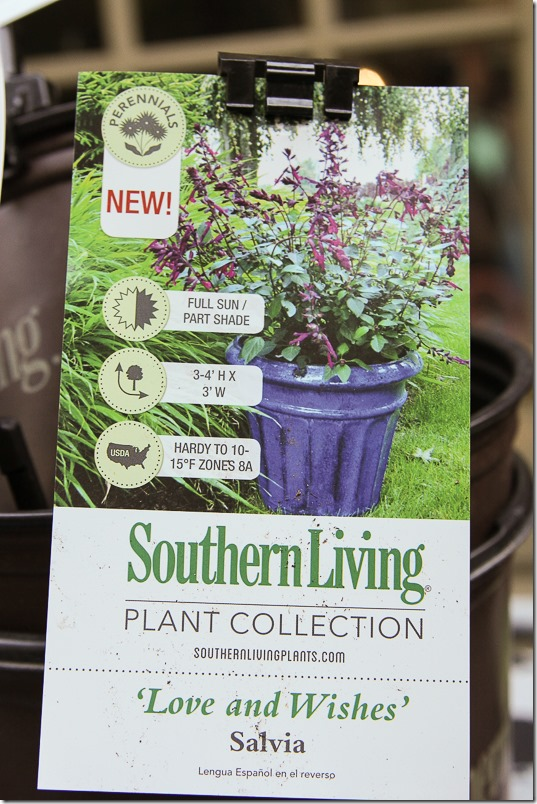Southern Living Plant Collection Best Plants for Fall