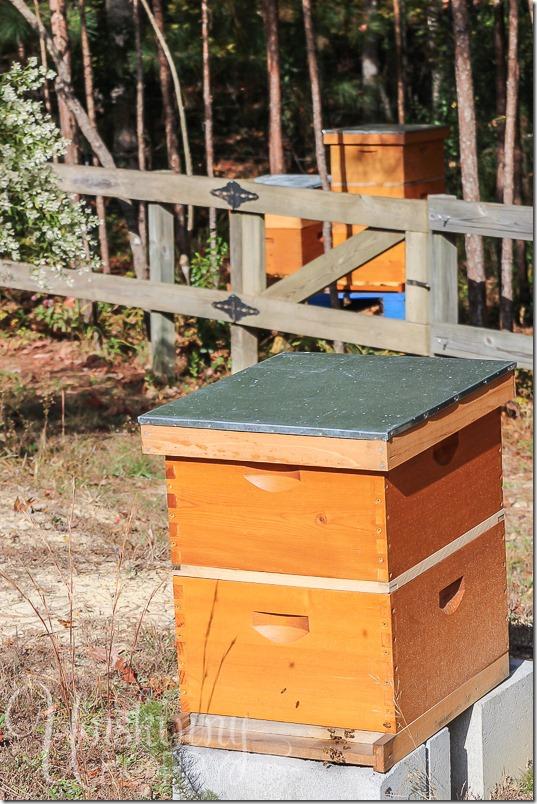 Blankenship Farms Bee Boxes
