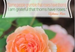 David-Austin-Roses-quote_thumb.jpg