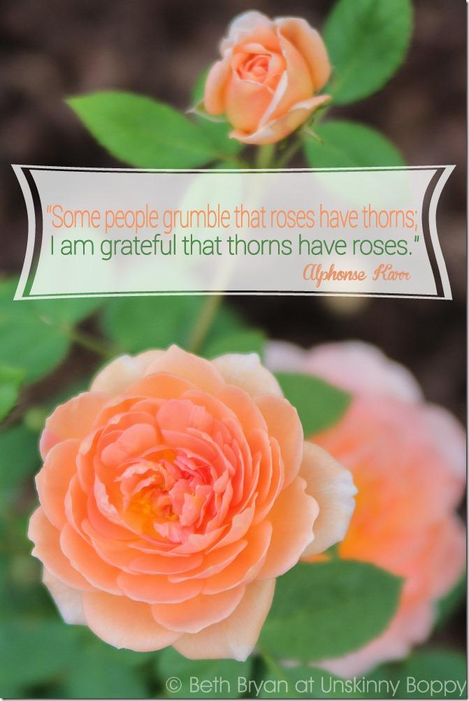 David Austin Roses quote