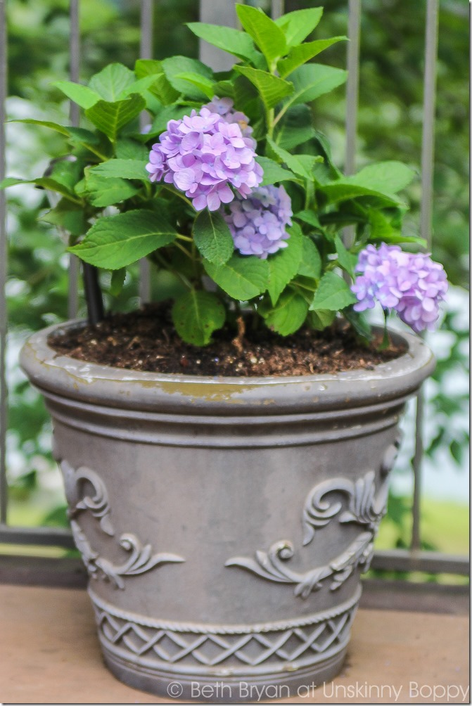 Pretty planters in the courtyard-11