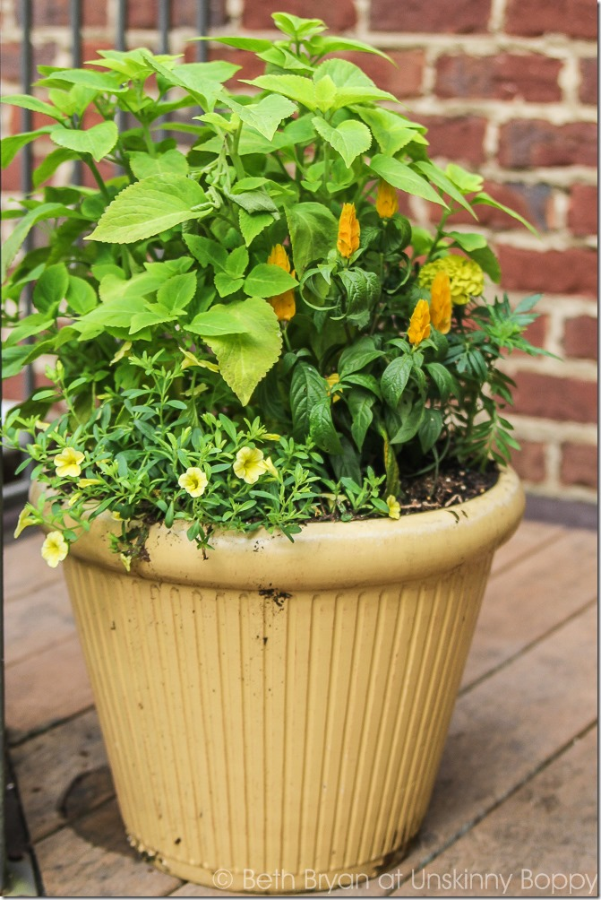 Pretty planters in the courtyard-12
