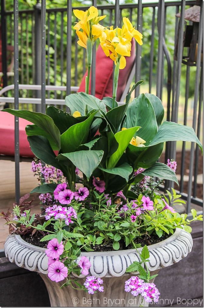 Pretty planters in the courtyard-14