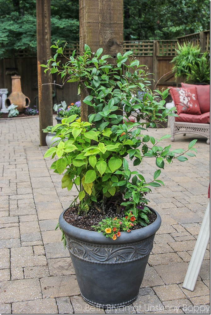 Pretty planters in the courtyard-8