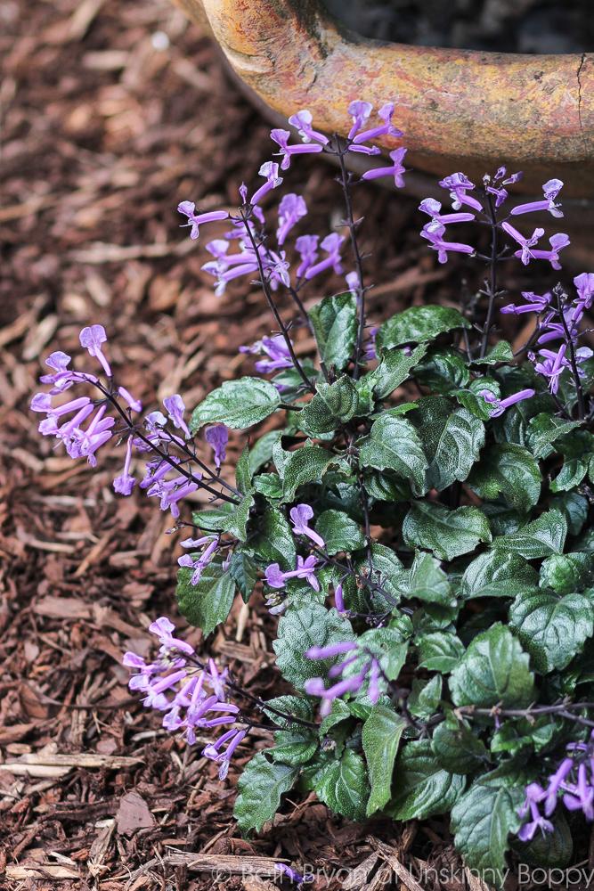 Top Five Best Shade Plants