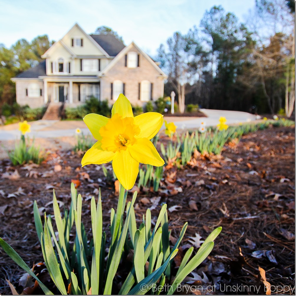 Colorblends daffodils | Cozy Spring Home Tour | www.unskinnyboppy.com