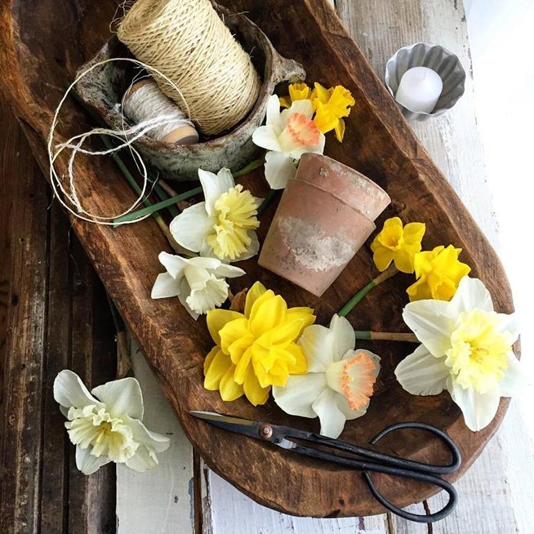 Daffodils in dough bowl