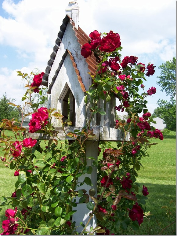 red roses growing on gothic church birdhouse