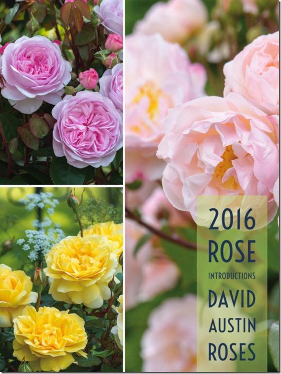 2016-david-austin