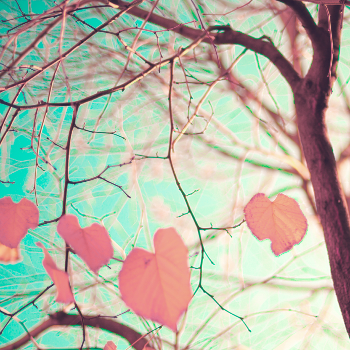 heart shaped leaves on trees