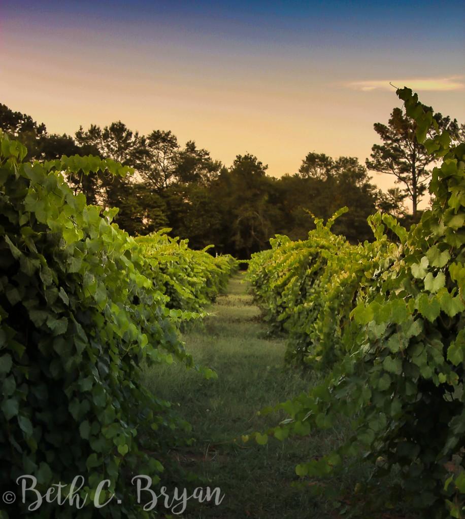 morgan-creek-winery-harpersville-alabama-2