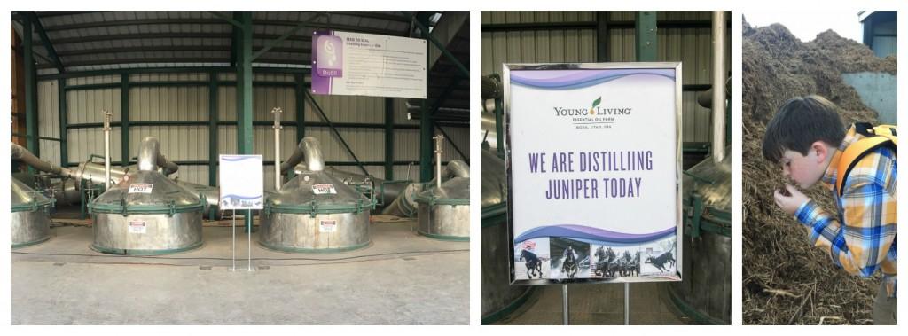 distilling-juniper-at-young-living-farm