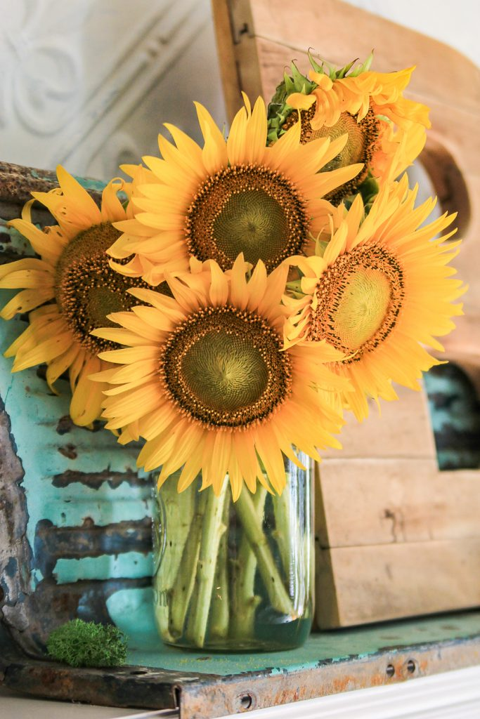 Cut Sunflowers in a vase