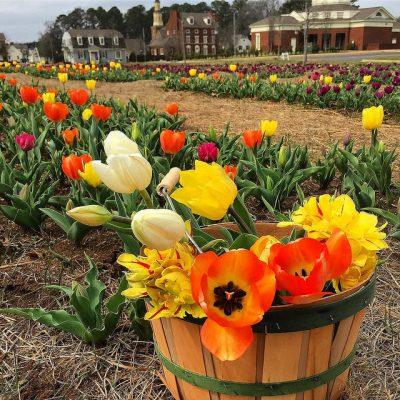 Tiptoe Through the Tulips at American Village in Montevallo