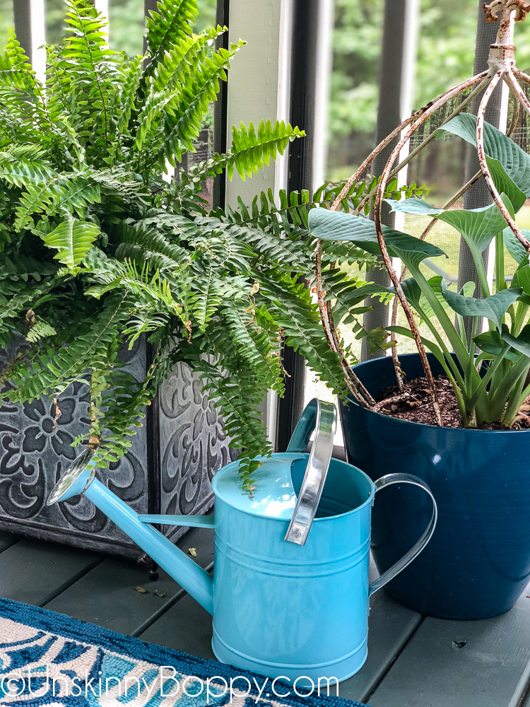 Hosta and ferns with aqua blue watering can from Big Lots