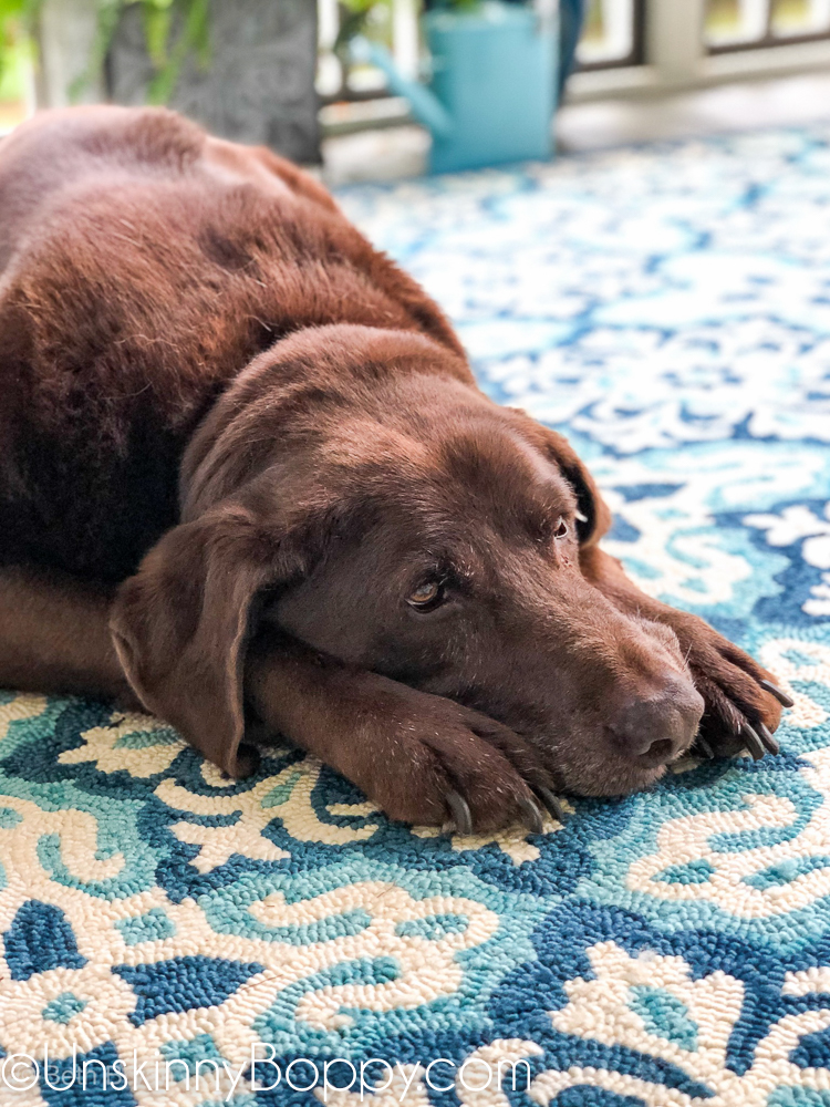 Chocolate lab laying down on a blue and aqua rug