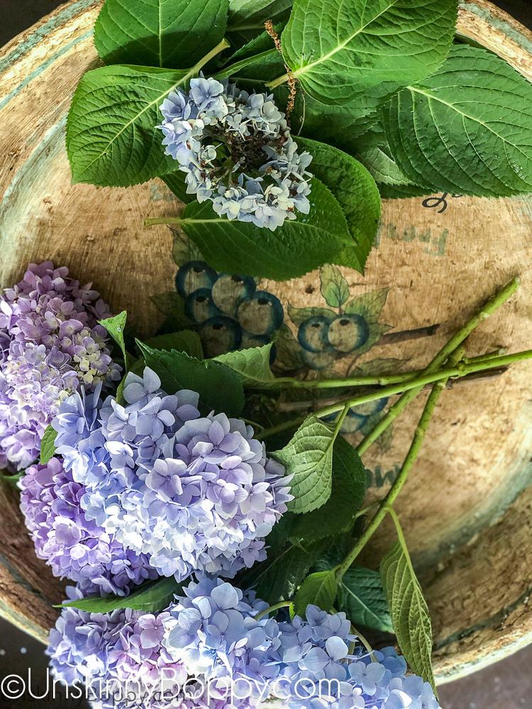 Cutting Hydrangea for flower arrangements