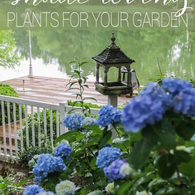 Top Five Shade Loving Plants
