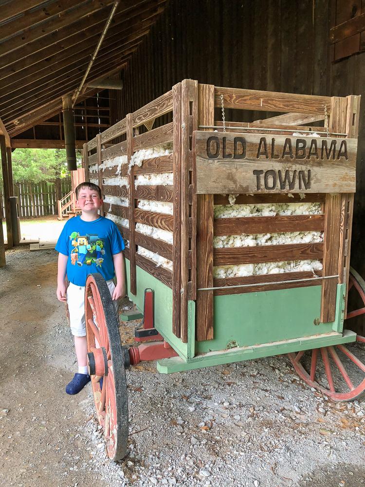 Cotton at Old Alabama Town