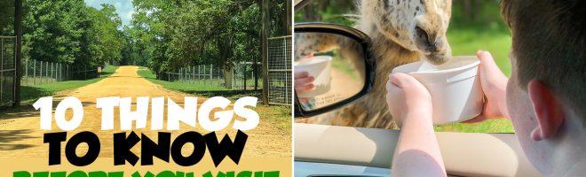 Must-See Montgomery: Alabama Safari Park