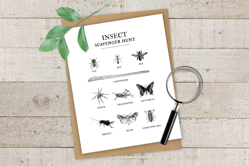 image regarding Bug Printable known as Summer time Pleasurable Collection Insect Scavenger Hunt No cost Printable