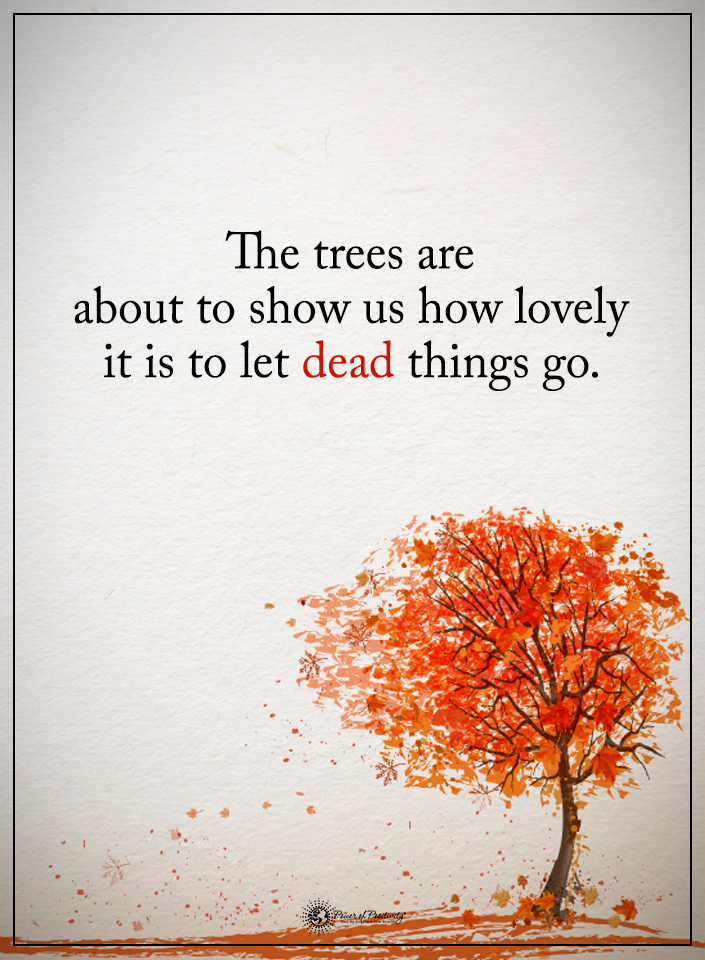 The trees are about to show us how lovely it is to let dead things go quote.
