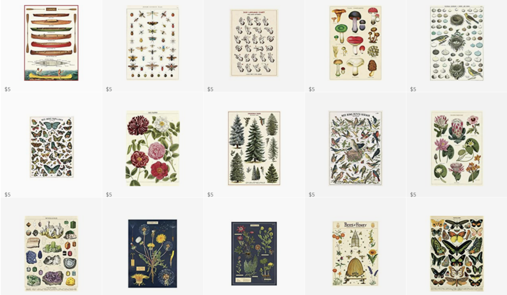 Botanical Posters that are actually Cavallini Wrapping Paper prints for just $5.00 on each on Amazon!