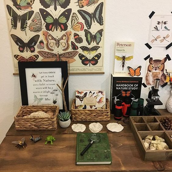 Nature station with butterfly poster