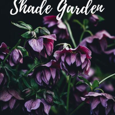 best flowers for shade garden
